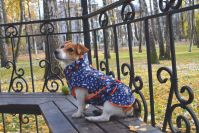 Одежда для собак породы джек рассел терьер