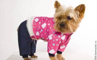 Как построить выкройки для собак йоркширского терьера?