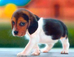 Идеи кличек собак девочек маленьких пород
