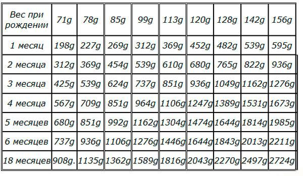 Таблица веса чихуахуа