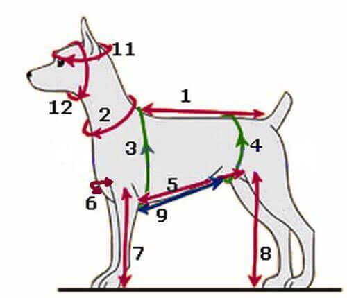 Какие мерки снять с собаки