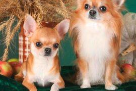 Покупки для собак в зоомагазине: лежанки, домик, лакомства и игрушки