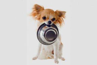 Чем нельзя кормить собаку? Опасные продукты для собак