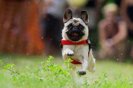 Как усмирить собаку, если она ведет себя агрессивно?