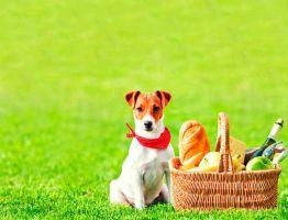 Чем кормить щенка джек рассел терьера?