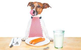 Чем кормить щенка и взрослую собаку джек рассел терьера?