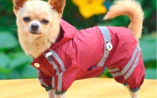 Как выбрать одежду для маленьких собак?